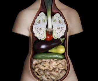 vegetables_system_anatomy_digestive_desktop_1920x1080_hd-wallpaper-728452
